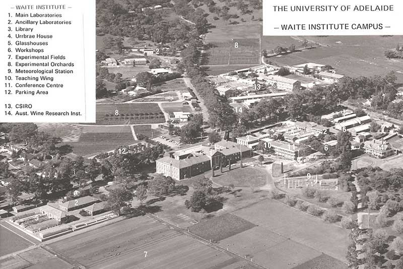 Arial view of the Waite Campus 1976, showing the experimental fields (7) where the trial was conducted
